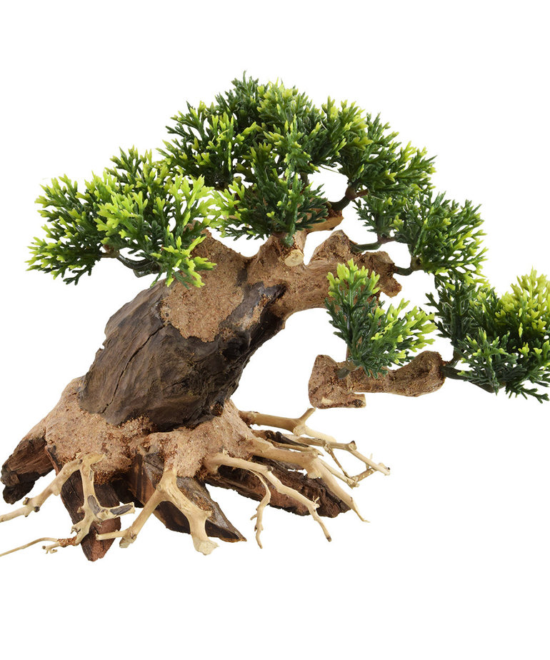 UNDERWATER TREASURES Bonsai Wood With Plant - Extra Small