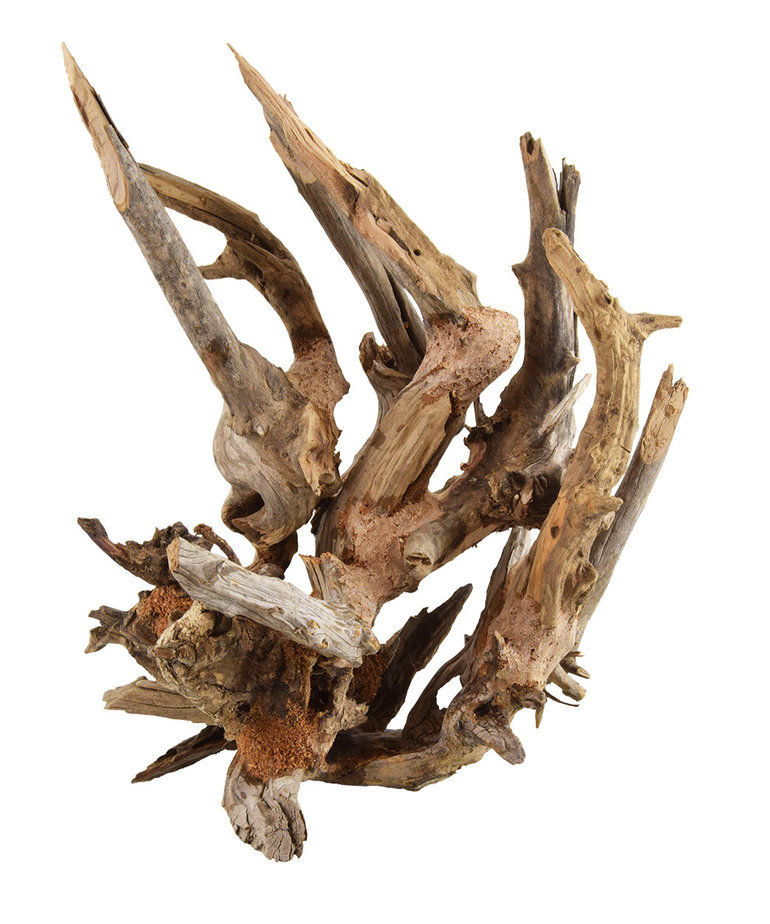 UNDERWATER TREASURES Kirin Bonsai Wood Sm