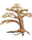 UNDERWATER TREASURES Pine Bonsai Wood - Medium