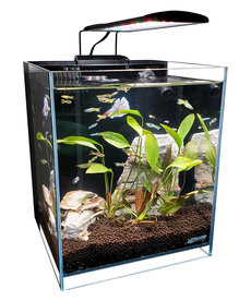 "Lifegard LIFEGARD AQUATICS 45° Low Iron Ultra Clear Aquarium - 8.3 gal - 11.81"" x 11.81"""