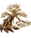 UNDERWATER TREASURES Bonsai Wood - X-Small
