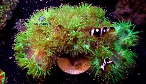 Livraison poissons et coraux bientôt disponible