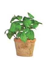 Esschert Asst Basil in Terracotta Pot Small