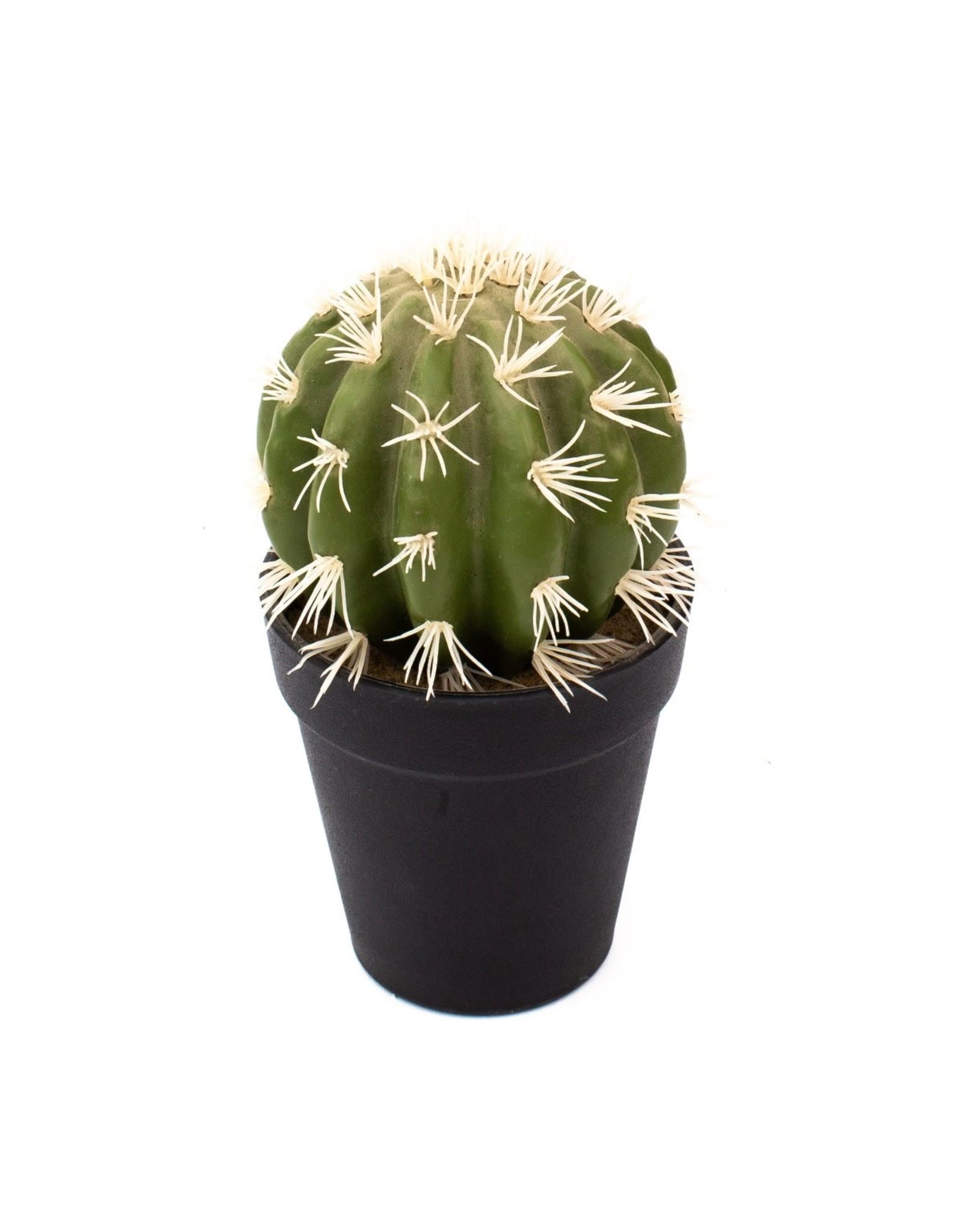 Edelman - Cactus Green Assorted