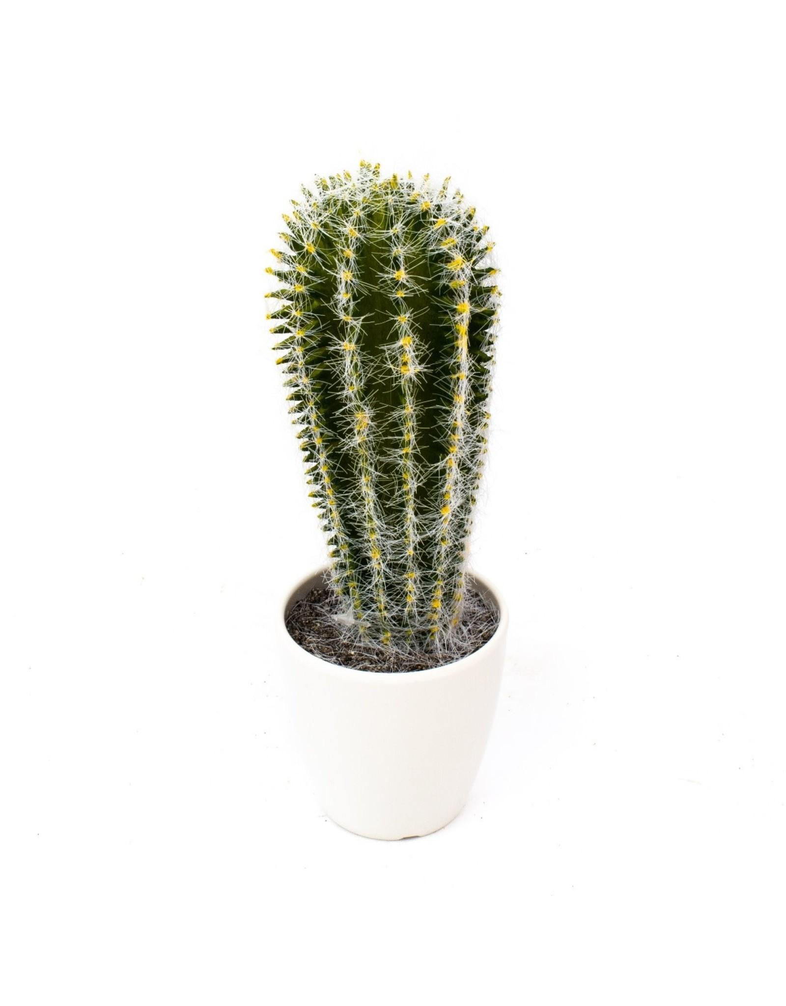 Edelman - Cactus in Pot Green Assorted - 2 Assorted