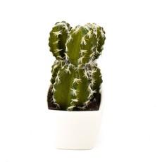 Edelman - Cactus in Pot Green Assorted - 3 Assorted