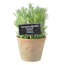 Esschert Rosemary in AT Pot Terra Cotta