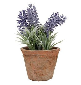 Esschert Lavender in Pot Terra Cotta