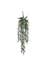 Mica Edelman - Eucalyptus Hanging Green