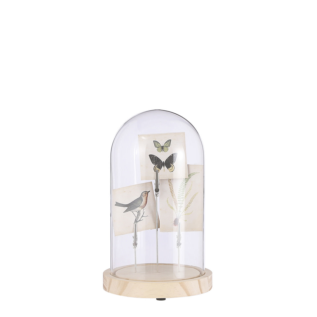 Glass Cover with Decoration - Butterfly,Bird,Branch