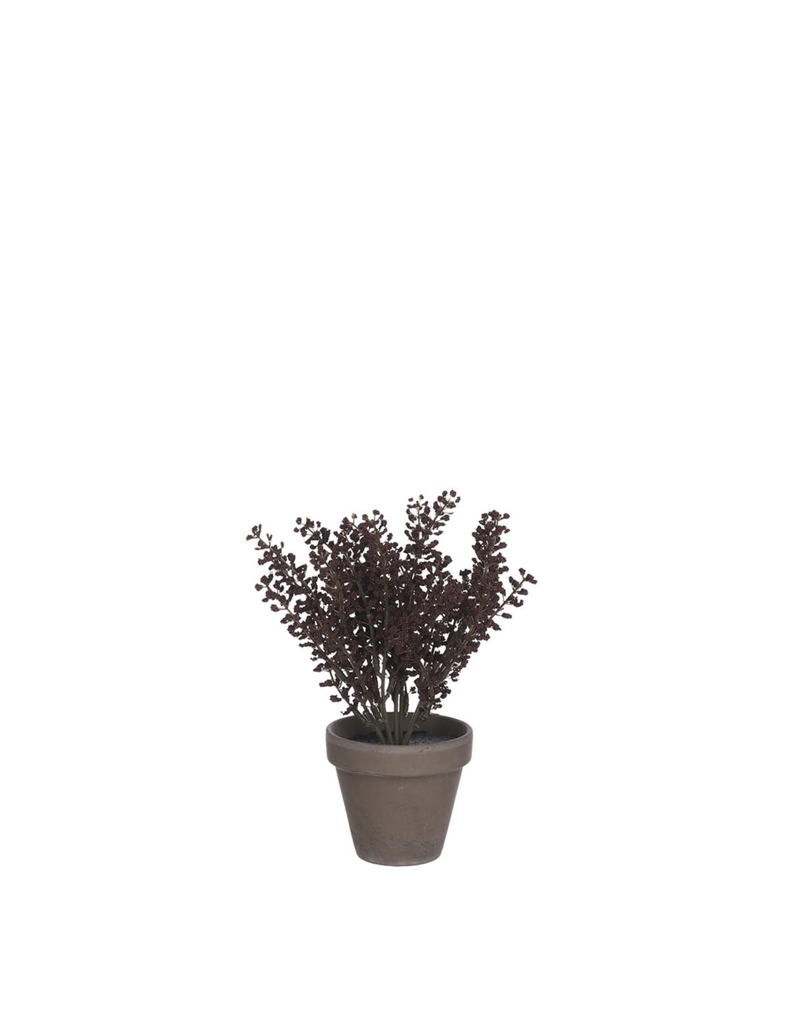 Astilbe In Grey Pot - h21xd16cm