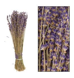 Dijk Lavender Dried Short Bunch Dark Blue