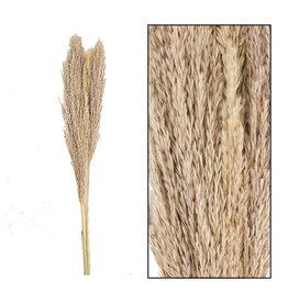 Dijk Wild reed plume natural XXL 3pc 115cm