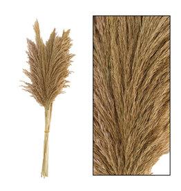 Dijk Wild Reed Plume Natural 10pc 75cm