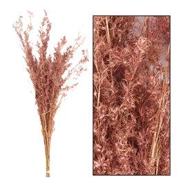 Dijk Alfonso grass 100cm light pink 100gr