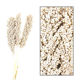 Dijk Indian corn 70cm white-wash 3pc poly