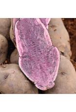 Gourmet Seed Potato - Russian Blue 500g