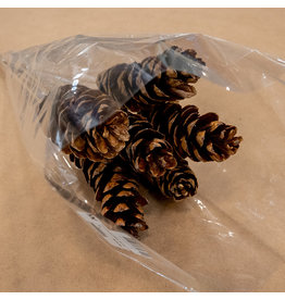 Pinecones on a Stick - Bundle