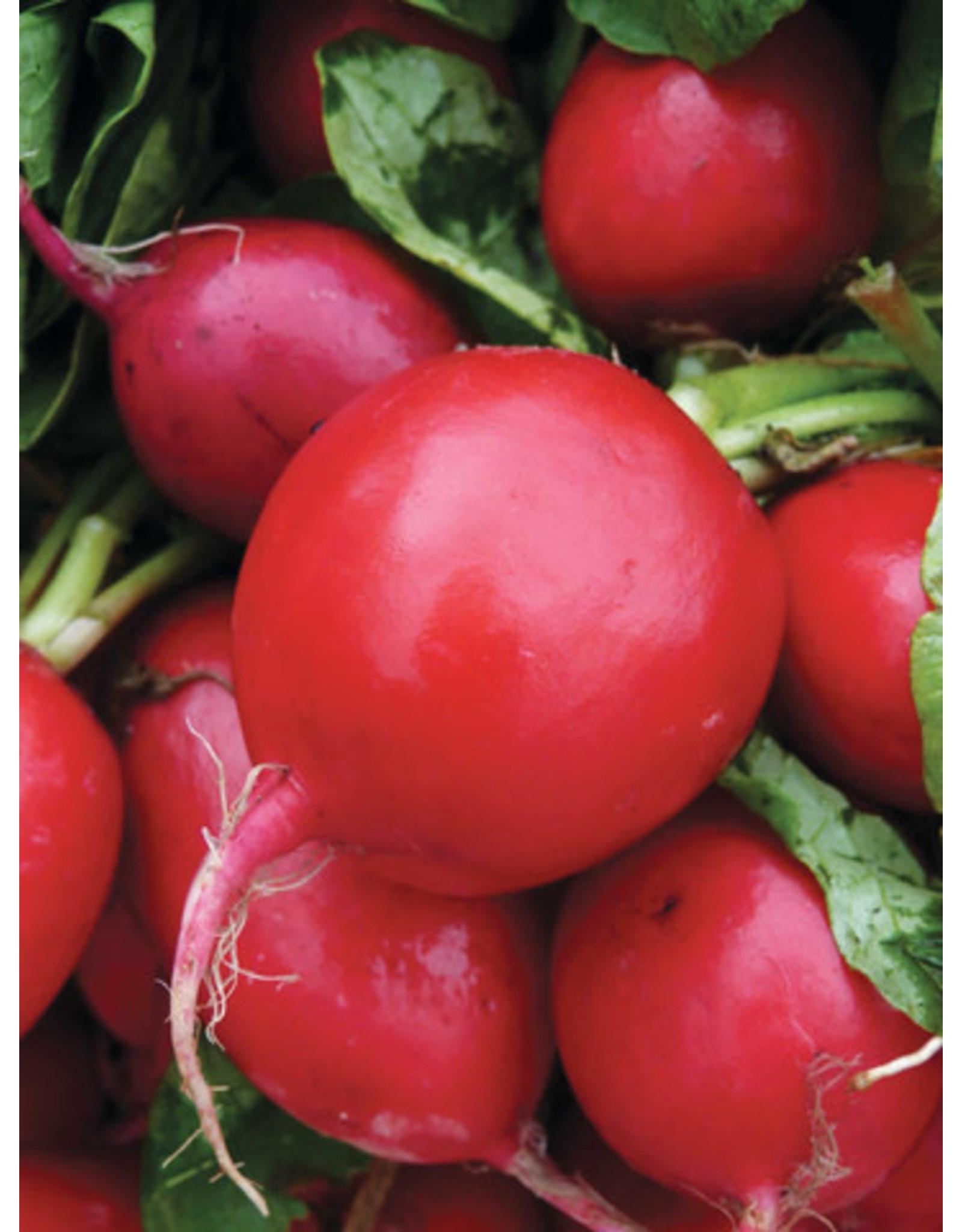 German Giant Radish Seeds (Aimers International) 2920
