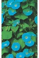 Heavenly Blue Morning Glory Seeds 5750