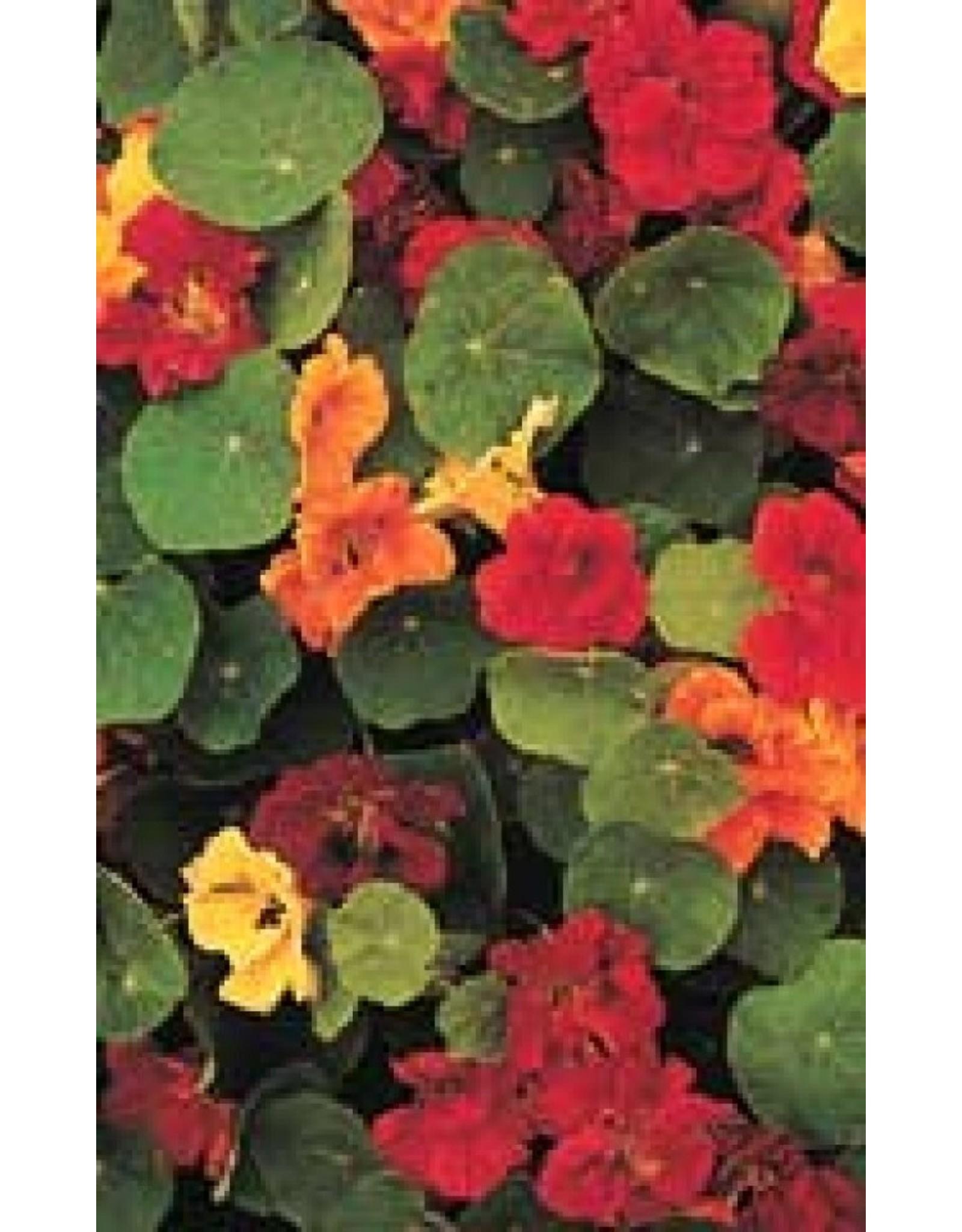 Dwarf Jewel Mixed Nasturtium Seeds 5780