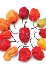 Carribean Red Hot Pepper Seeds 1921