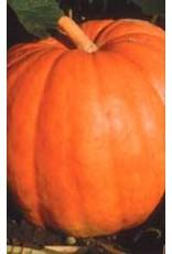 Big Max Pumpkin Seeds 2045