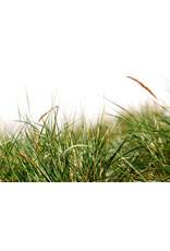 Annual Mixture Ornamental Grass Seeds 7005