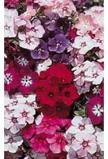 Drummondii Mixed Phlox Seeds 6005