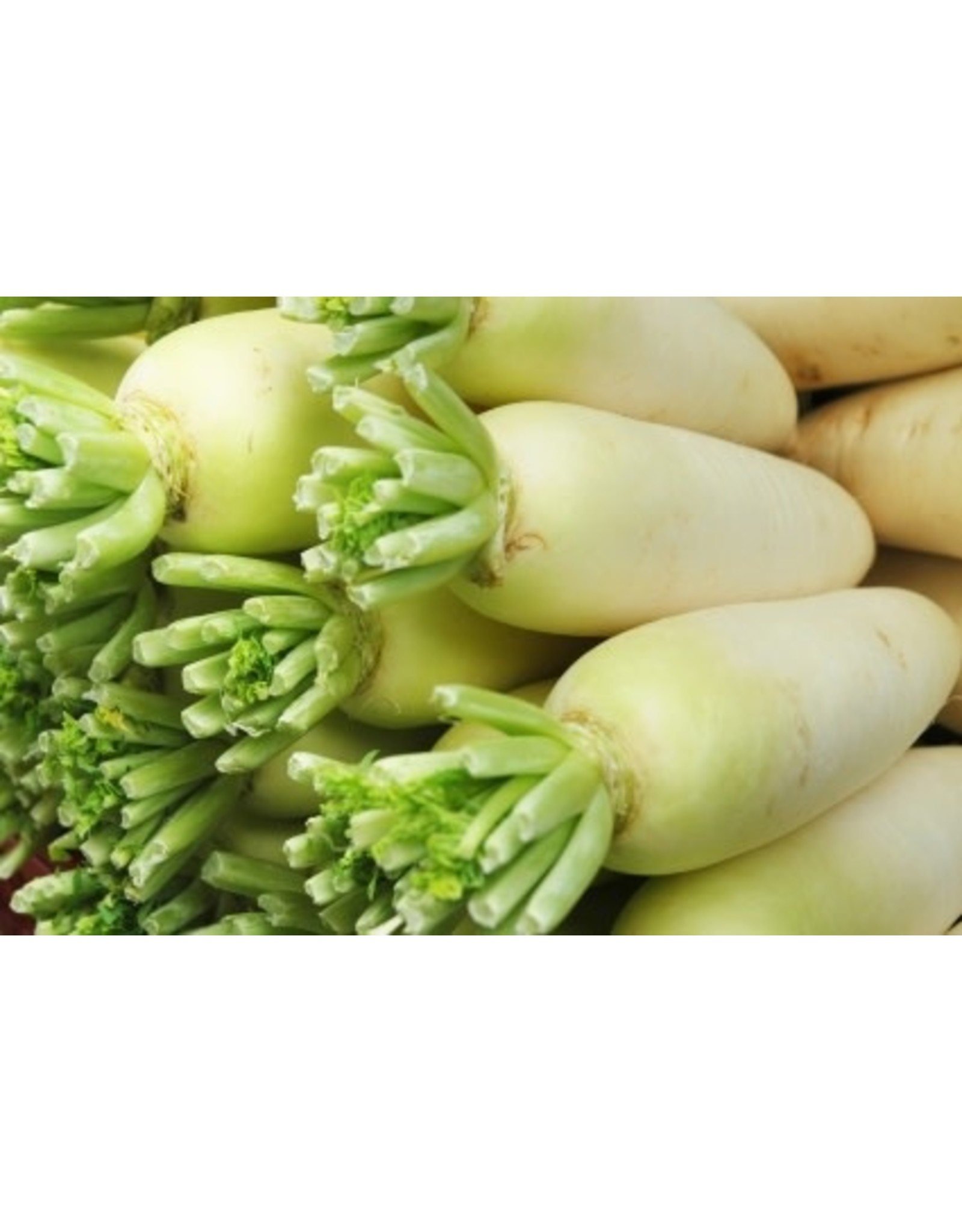 China White Radish Seeds (Winter Type) 2130