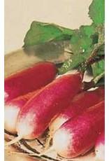 French Breakfast Radish Seeds (Summer Type) 2095