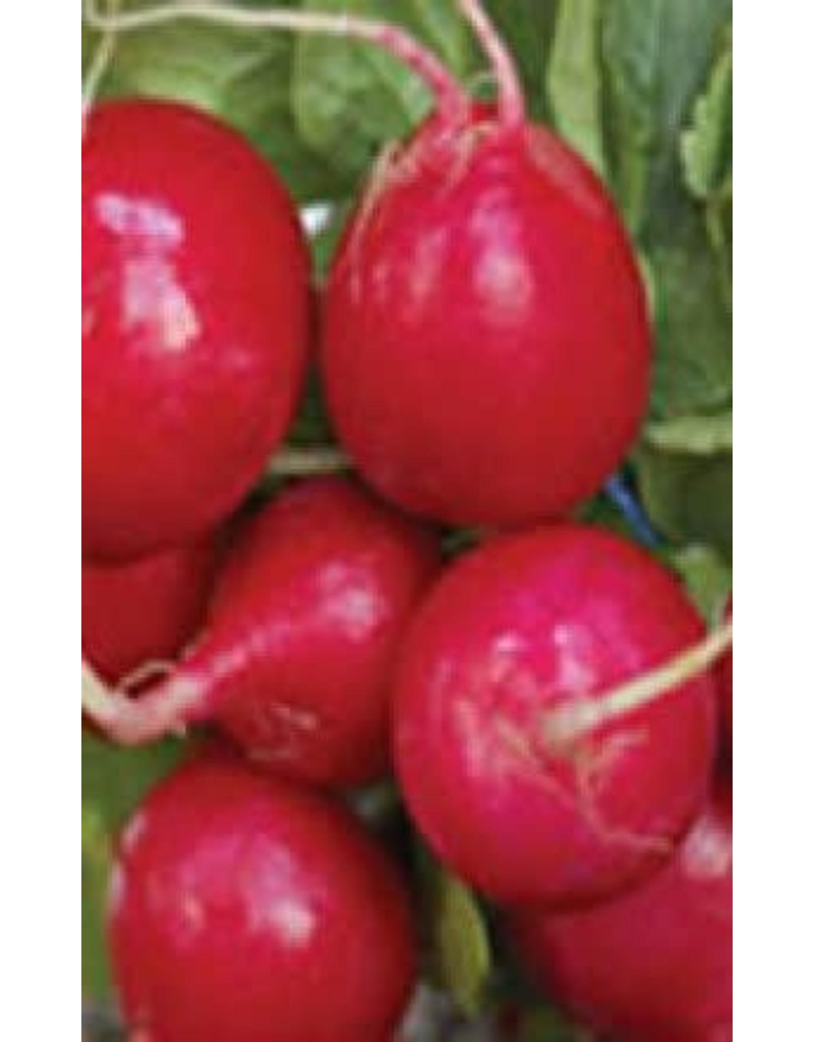 Early Scarlet Globe Radish Seeds (Summer Type) 2090