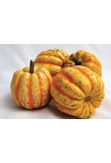 Celebration Hybrid Squash Seeds (Winter Type) 2300