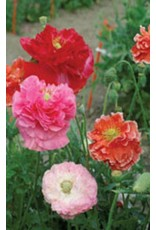 Double Shirley Mixed Poppy Seeds 6010