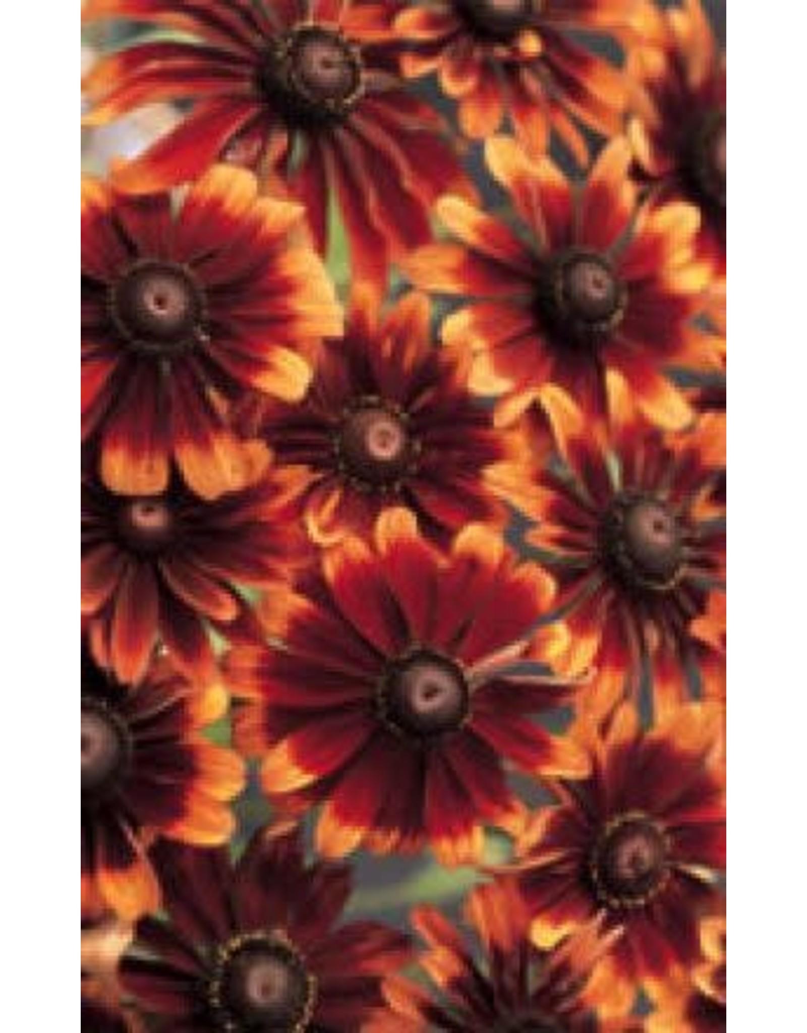 Chocolate/Orange Rudbeckia Seeds (Annual Type) 6610
