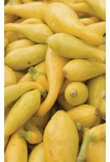 Golden Crookneck Yellow Squash Seeds (Summer Type) 2220