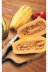 Delicata Squash Seeds (Sweet Potato Type) 2285