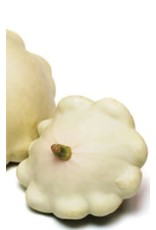 Early White Scallop Squash Seeds 2205