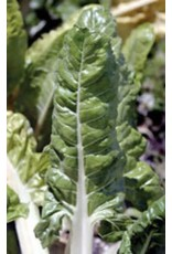 Fordhook Giant Swiss Chard Seeds 2175