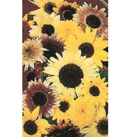 Monet's Palette Sunflower Seeds 6205