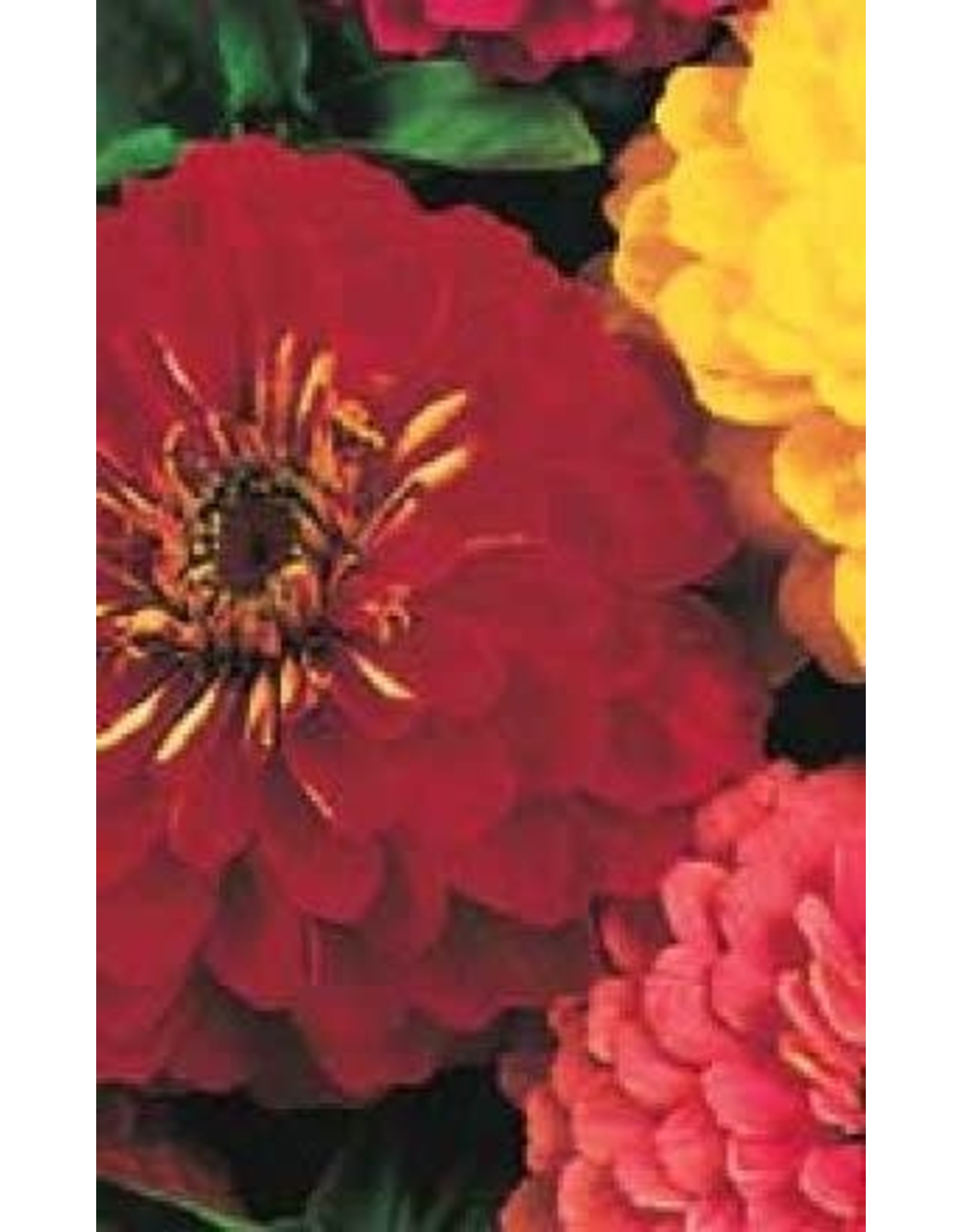 Giants of California Mixture Zinnia Seeds 6290