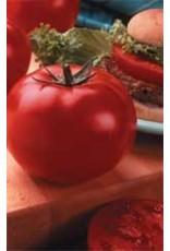 Big Beef Hybrid Tomato Seeds (Italian Type) 2310