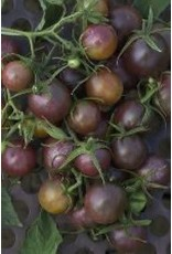 Black Cherry Tomato Seeds 2380
