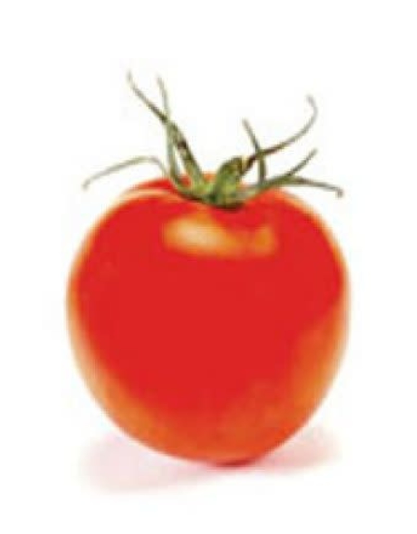 Bonny Best Improved Tomato Seeds 2335