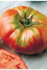 Brandywine Tomato Seeds 2385