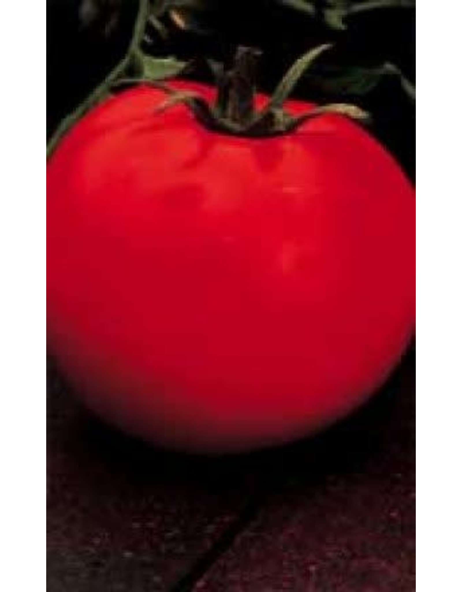 Celebrity Hybrid Tomato Seeds (Bush Type) 2315
