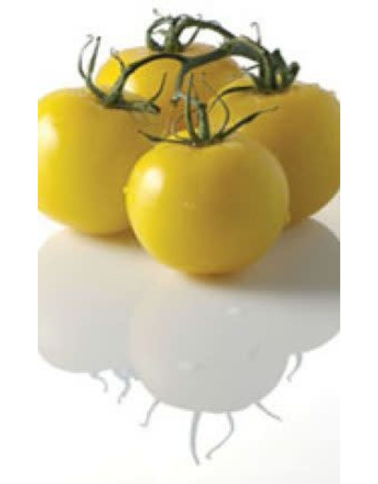 Golden Queen or Jubilee Tomato Seeds (Yellow Fruited Type) 2340