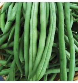Provider Bean Seeds (Aimers International) 2725