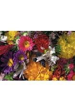 Annual Flower Mixture Seeds 5025