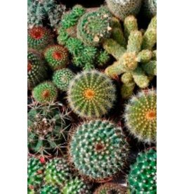Cactus Mixture Seeds 5075